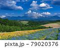 北海道・美瑛町 初夏の花畑の風景 79020376