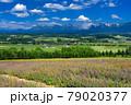 北海道・上富良野町 初夏の花畑と十勝岳連峰の風景 79020377