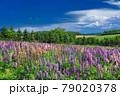 北海道・上富良野町 初夏の畑の風景 79020378