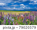 北海道・上富良野町 初夏の花畑と十勝岳連峰の風景 79020379