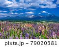 北海道・上富良野町 初夏の花畑と十勝岳連峰の風景 79020381