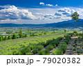 北海道・上富良野町 初夏の花畑の風景 79020382