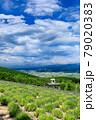 北海道・上富良野町 初夏の花畑と大雪山の風景 79020383