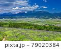 北海道・上富良野町 初夏の花畑と十勝岳連峰の風景 79020384