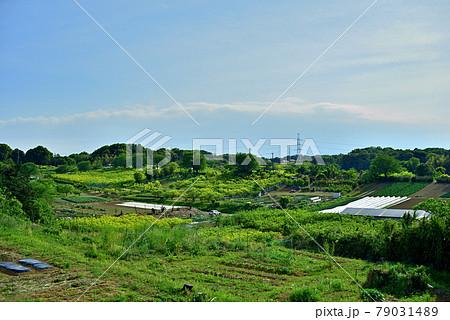 里山に広がる農産物畑とビニールハウス 79031489