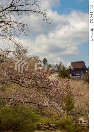 吉野の風景 中千本から見た風景(金峯山寺本堂蔵王堂) 79041419