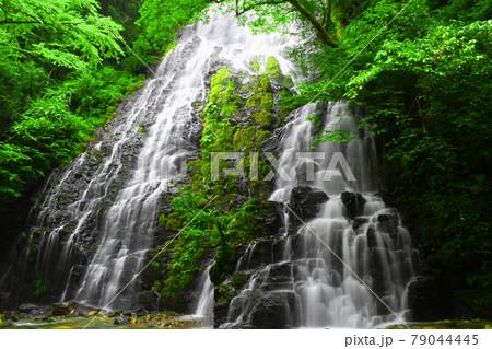 新緑と岩肌をなだらかに流れ落ちる滝 79044445