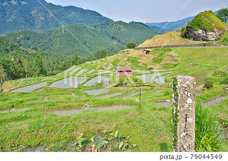 【丸山千枚田】 三重県熊野市紀和町丸山 79044549