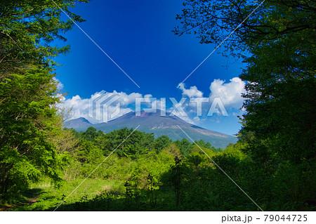 軽井沢の森からの浅間山 79044725