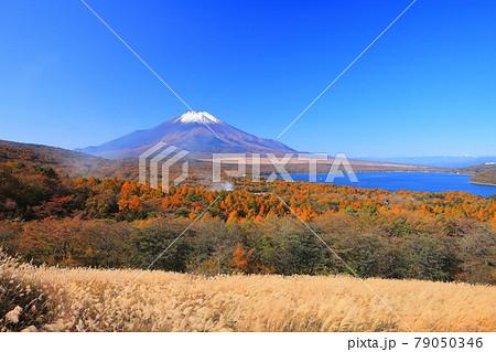 【山梨県】山中湖パノラマ台から見た富士山と紅葉 79050346