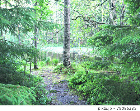 Noux ヌークシオ国立公園の針葉樹 79086235