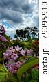 花と雲と空 79095910