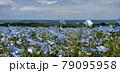 ネモフィラ 79095958