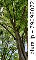 森林 79096072
