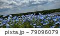 ネモフィラ 79096079