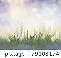 white muscari flowers 79103174