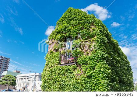 青空をバックにした緑の蔦が全体に絡んだ建物 79165945