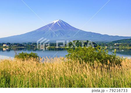 (山梨県)快晴の空と富士山と新緑 79216733