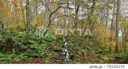 晩秋の奥入瀬渓流で見た紅葉に囲まれた滝のパノラマ情景@青森 79230135