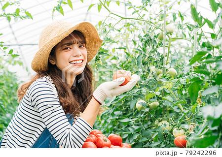 トマトの収穫をする女性  79242296