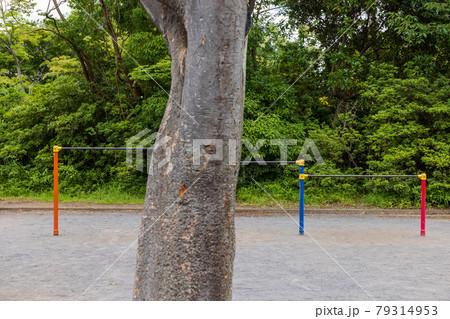 丘の上の児童公園の赤と青の鉄棒と木の幹 79314953