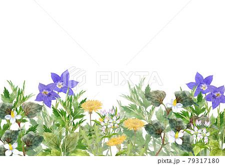 日本の薬草の花畑 水彩画 79317180
