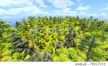 緑の風景 79317573