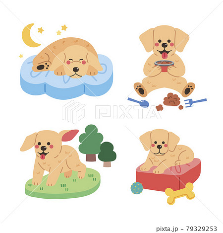 various actions of golden retriever dog 79329253