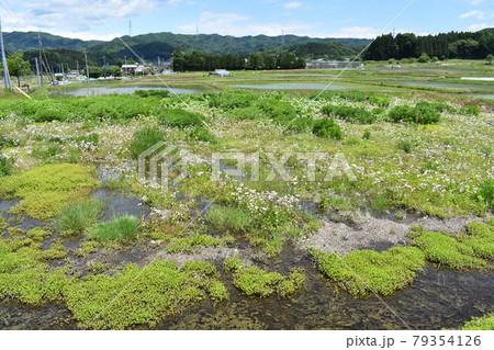 日本 群馬の水上 夏の風景 79354126