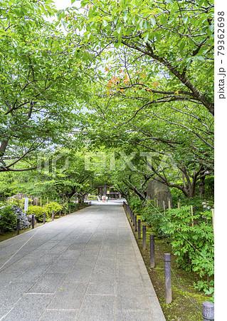 【神奈川県】鎌倉 生い茂る新緑が美しい建長寺 79362698