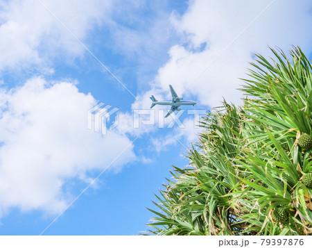 沖縄の空、アダンの木の上空を通過する旅客機 79397876