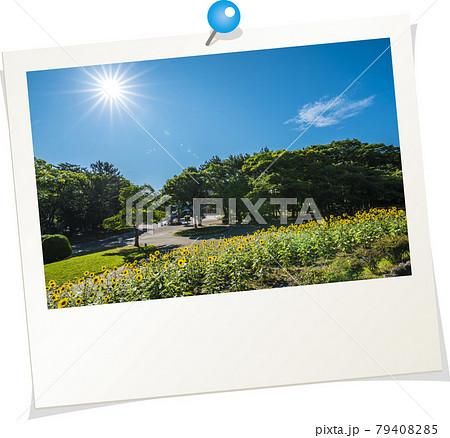 ポラロイド風写真 ひまわり 79408285