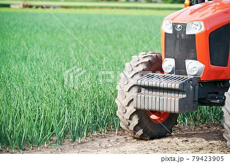 玉葱畑とトラクター 農産物 北海道 79423905
