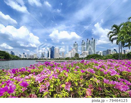 タイ・バンコク ベンジャキティ公園 / Benjakitti Park, Bangkok 79464125