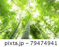 鎌倉報国寺の光り降り注ぐ竹林 79474941
