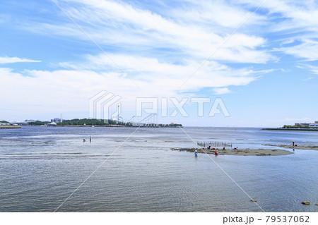 神奈川県横浜市海の公園の潮干狩り 79537062