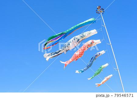 快晴の青空に鯉のぼり 79546571