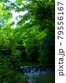 新緑と川と古い橋 79556167