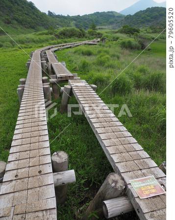 くじゅう 初夏の雨ヶ池 大分県玖珠郡九重町田野 79605520