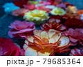 水に浮かぶカラフルなベゴニアの花 79685364