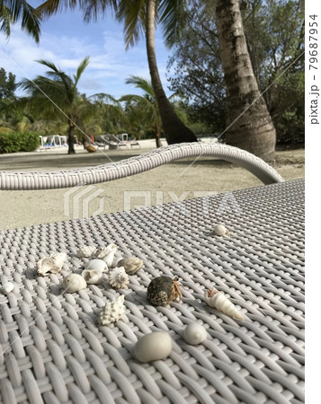 ビーチベンチの上の様々な形のヤドカリや貝(モルディブ) 79687954