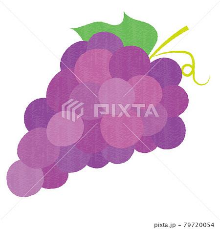 手描き風のかわいいブドウ 79720054