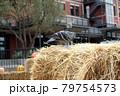 藁の上のハト 79754573