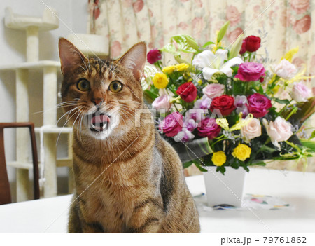 1歳の誕生日を迎えたキジトラの仔猫と生花アレンジメント 79761862