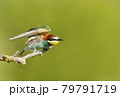 Portrait of a perched Bee-eater in summer 79791719