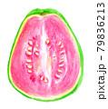 半分に切ったグアバの水彩イラスト 79836213