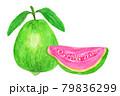 一切れ付きグアバの水彩イラスト 79836299