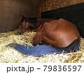厩舎で疲れて寝る競走馬のお尻 79836597