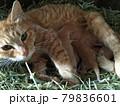 産まれたてホヤホヤの子猫とママ 79836601