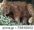 産まれたてホヤホヤの子猫とお母さん 79836602